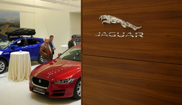 Jaguar Wall